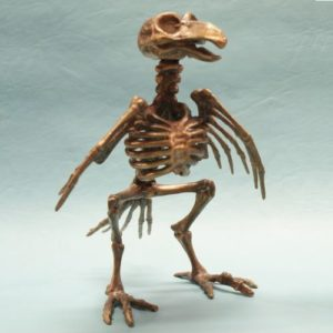 Pirate Bird Skeleton